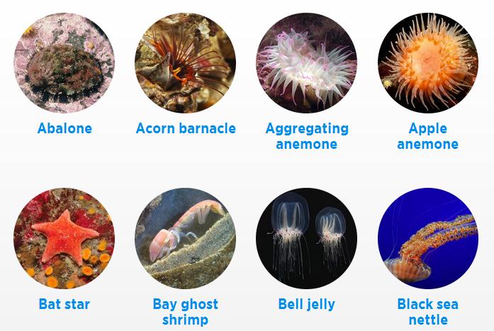 51 Koleksi Gambar Jenis Hewan Avertebrata Gratis Terbaik
