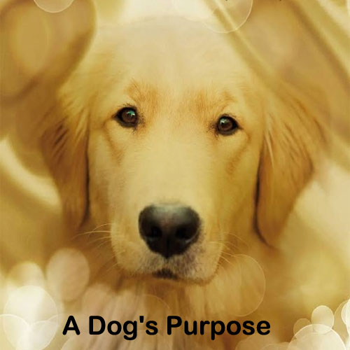 Film A Dog's Purpose 2017