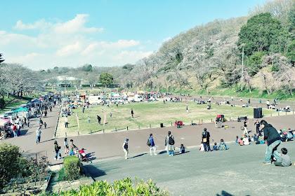 Kodomo no Kuni, Taman  Hanami di Jepang