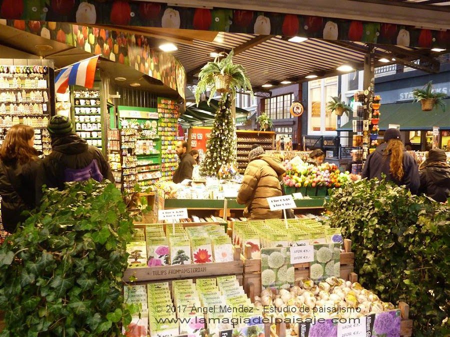 Mercado de las flores en Amsterdam