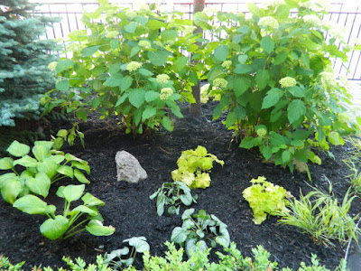 New Front Yard Garden Makeover After in the Beach by Paul Jung Gardening Services--a Toronto Gardening Company