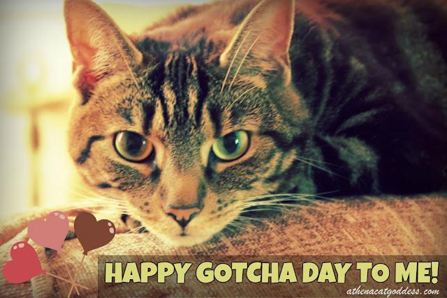 Happy Gotcha Day!