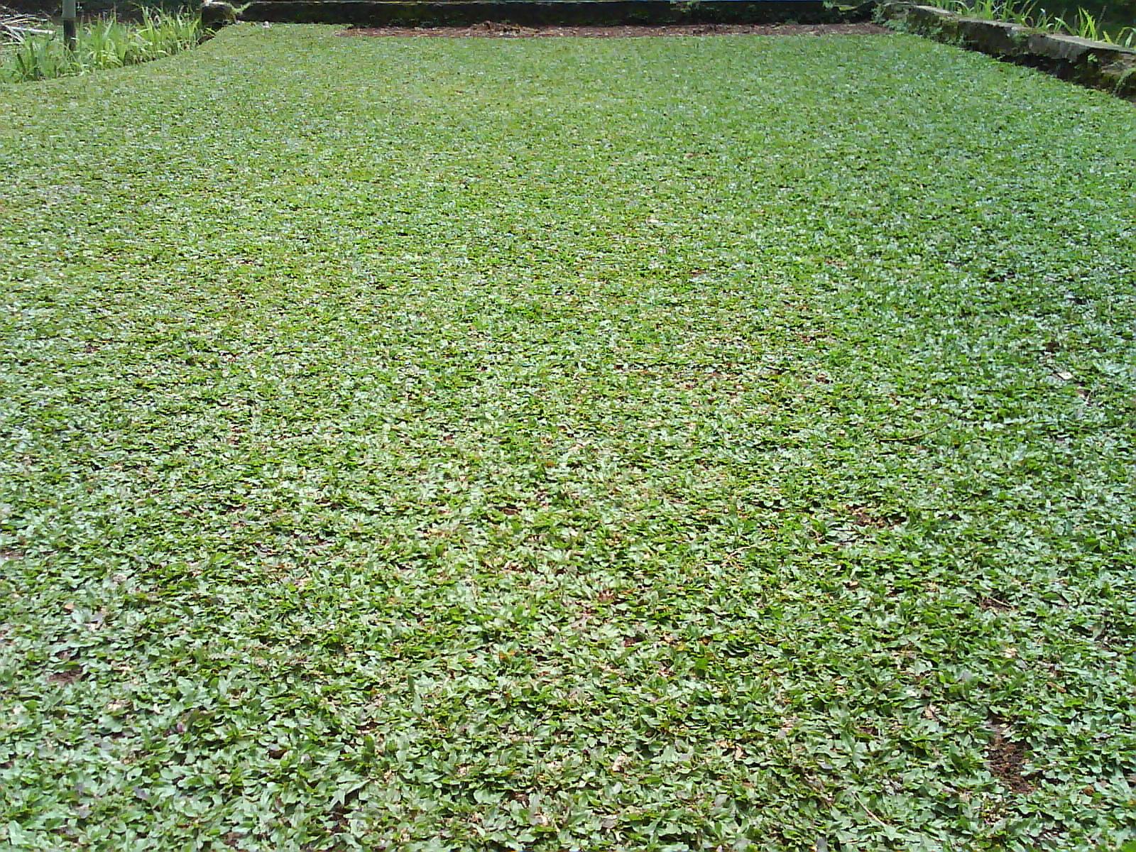 taman rumput taman kolam taman minimalis LOVE GREEN