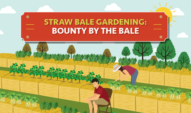 Straw Bale Gardening Bounty by the Bale