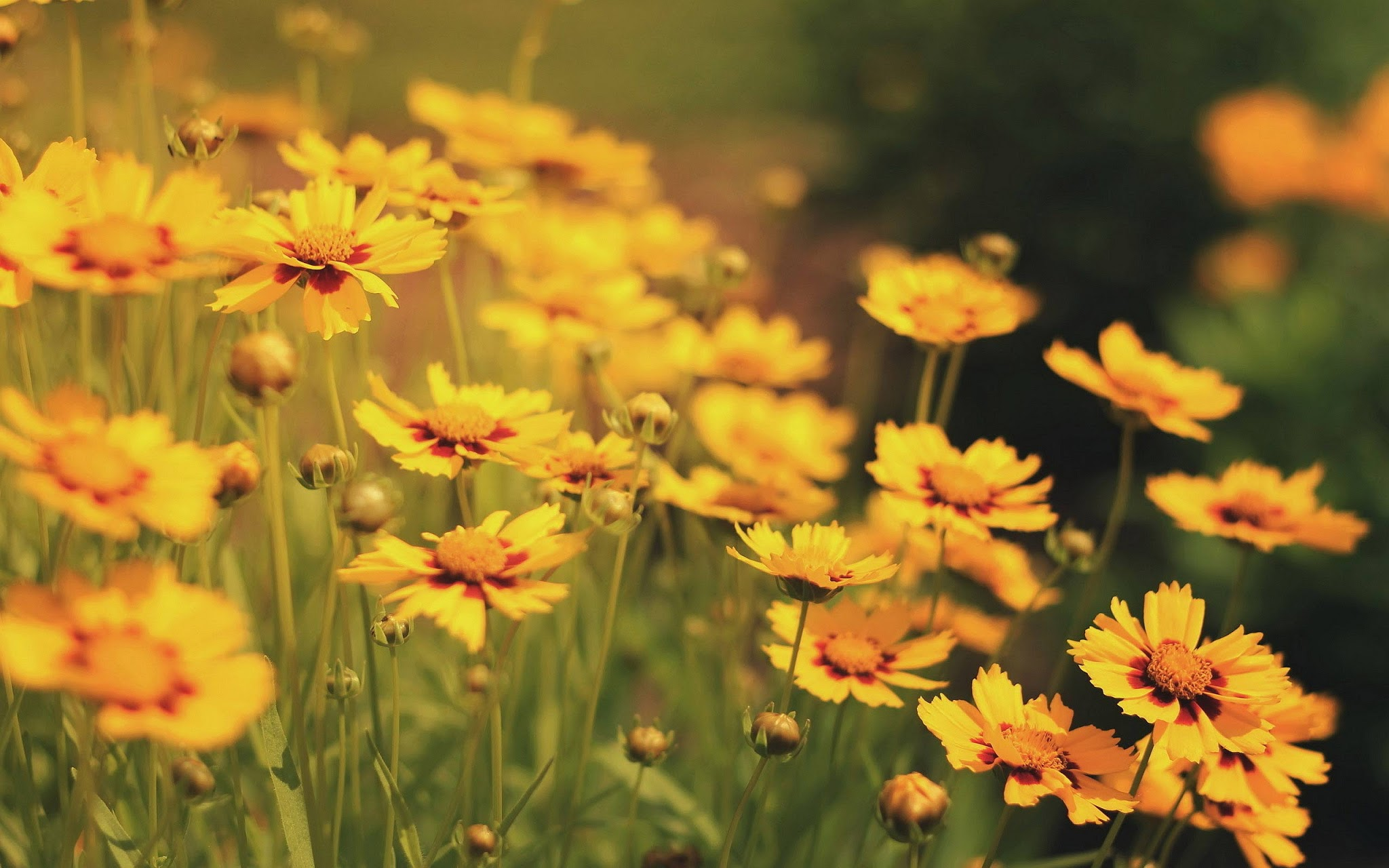 Flores Tumblr Vintage Naturallycurlyecom