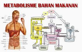 Melakukan Metabolisme