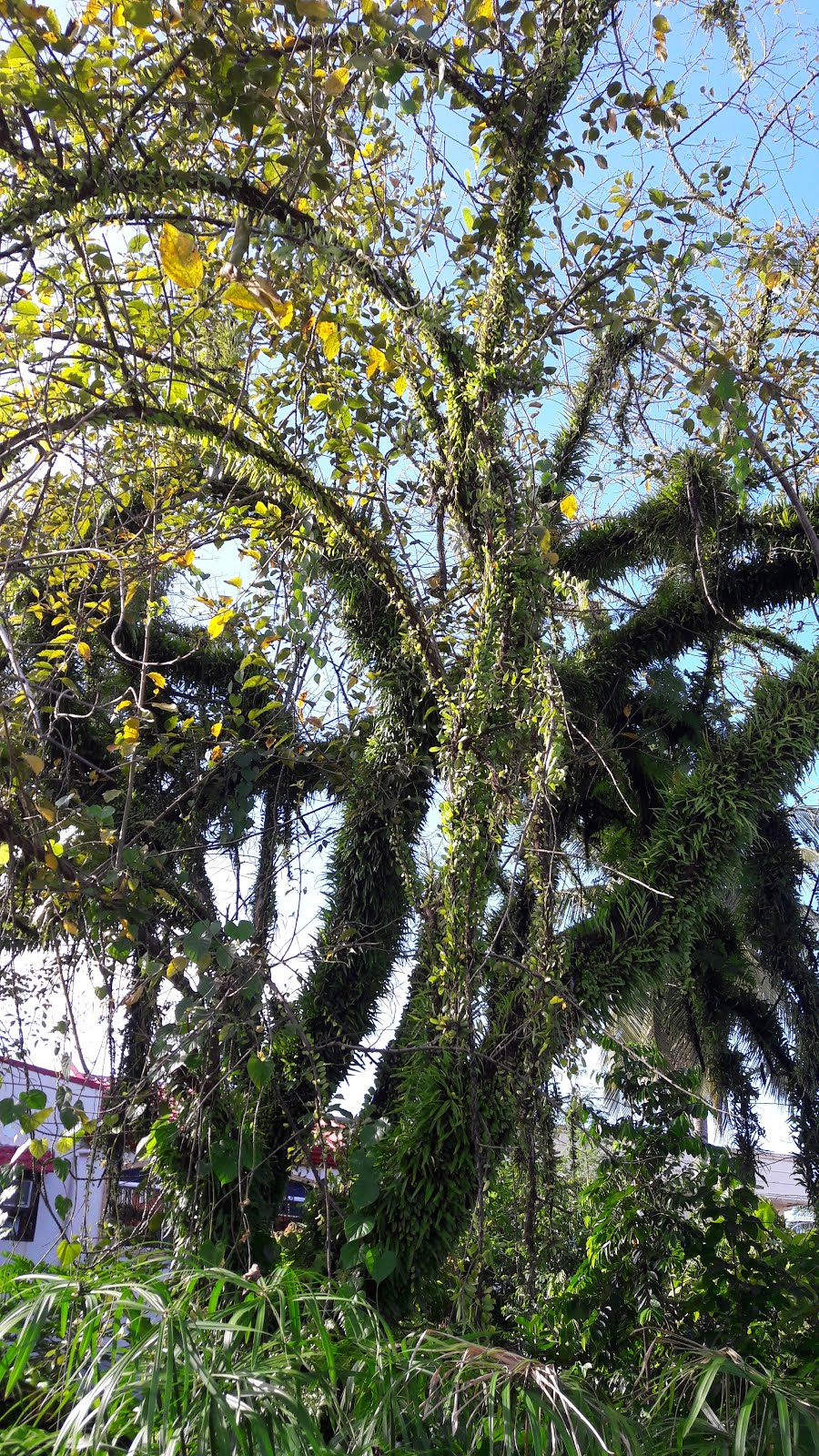 OUR PHILIPPINE TREES