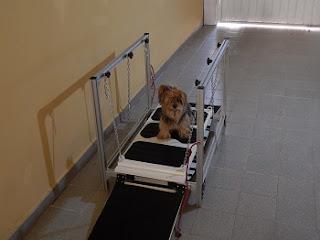 operação de osciladores para cães