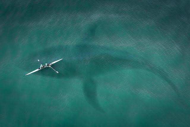 Taille du requin mégalodon