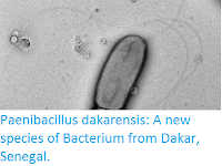 http://sciencythoughts.blogspot.co.uk/2016/05/paenibacillus-dakarensis-new-species-of.html