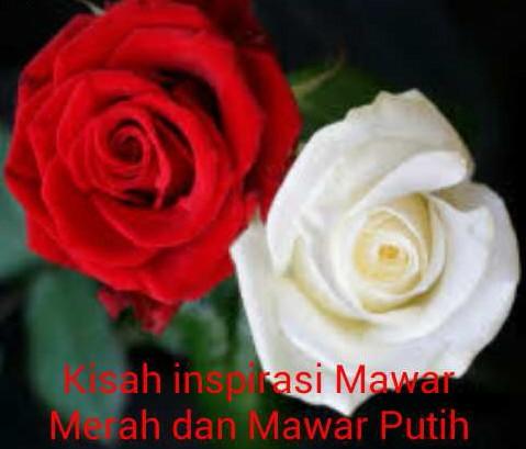 Kisah Inspirasi Mawar Merah Dan Mawar Putih Kisah Motivasi Hidup