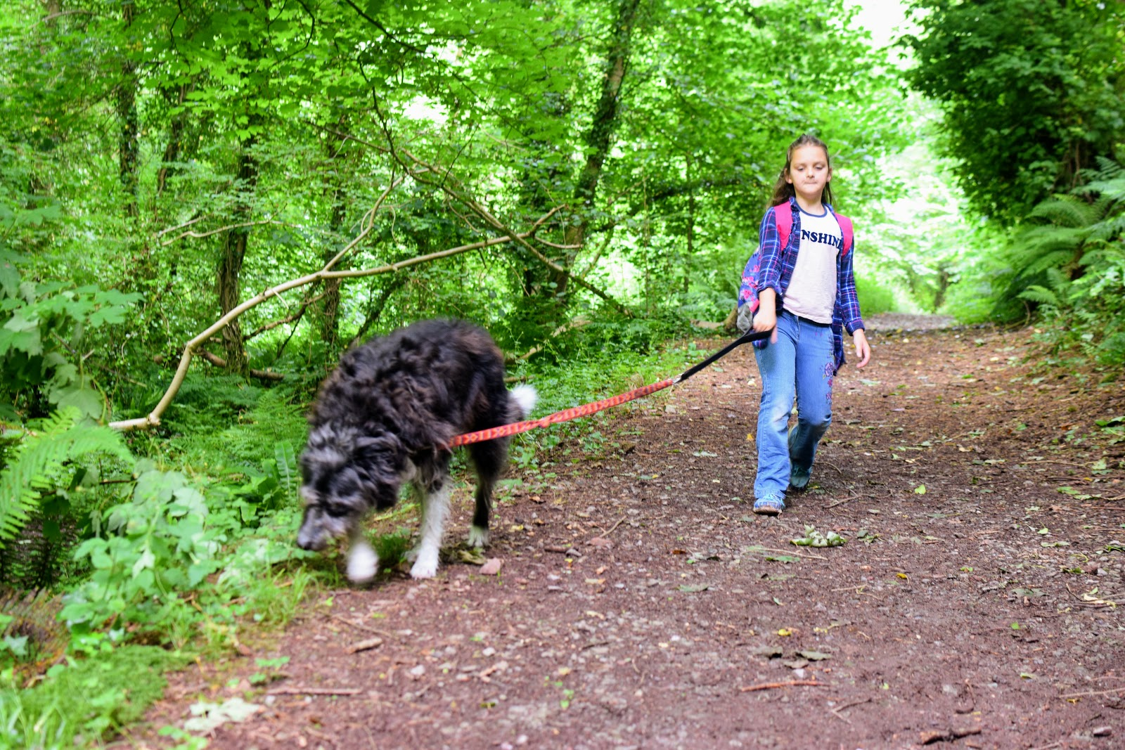 , A Weekend Walk Down Castle Pill Woods and Caring for Toby Dog's Teeth