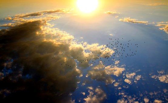 17 Manfaat Energi Matahari bagi Hewan