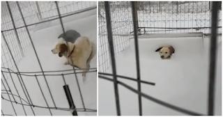 Λήμνος: Άφησαν δεμένο ένα σκυλάκι στο χιόνι να ξεπαγιάζει από το κρύο