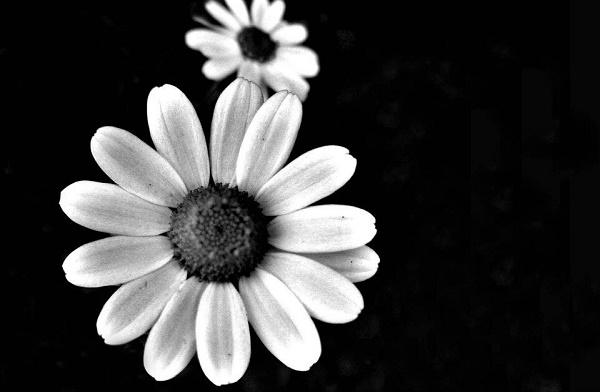 Cuộc sống không nhất thiết không phải phân rõ trắng đen