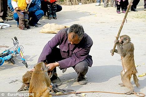 Mono atacando con Palo