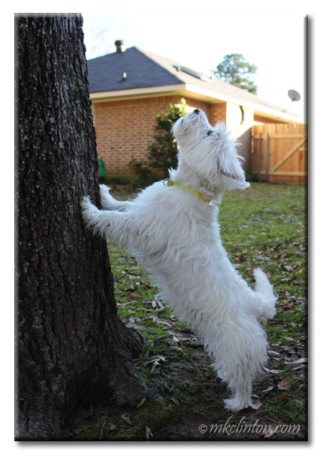 White Westie dog leaning on tree