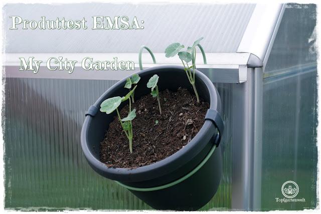 Gartenblog Topfgartenwelt Produkttest EMSA My City Garden: Blumentöpfe, Rankgitter und Befestigungen im Test - perfektes Zubehör für den Topfgarten