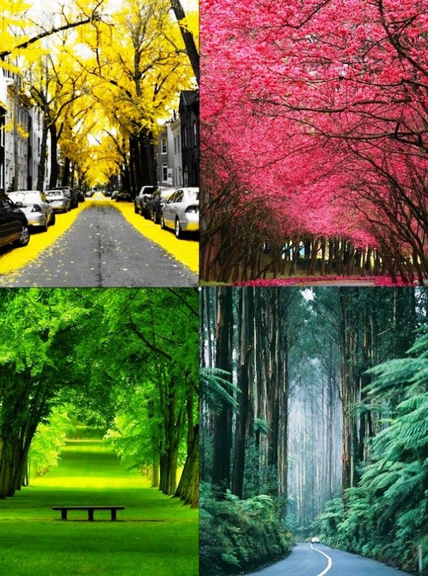 Cool Nature Effects Pictures