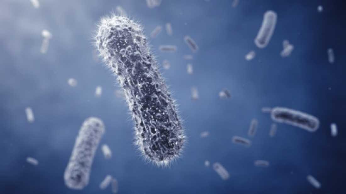 دراسة تكشف عن أن البكتيريا تستطيع التحدث إلى بعضها عن طريق الإشارات الكهربائية