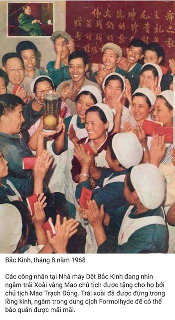 Trái xoài của Mao Trạch Đông
