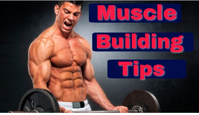 muscle building tips