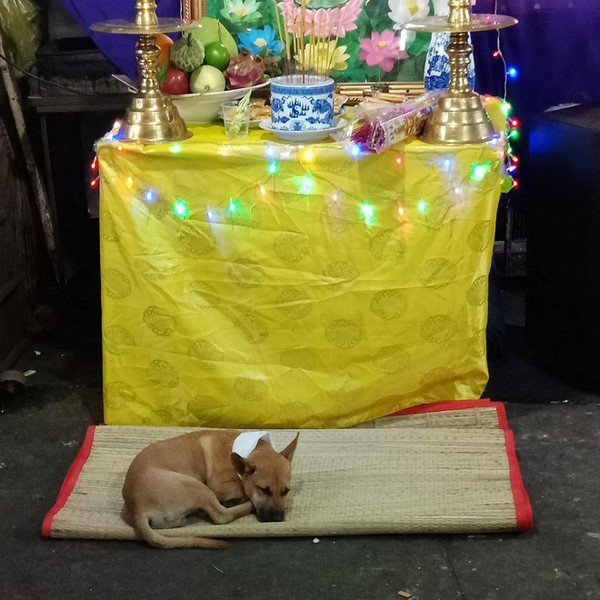 Rơi nước mắt chú chó nhỏ buồn bã bỏ cả ăn để túc trực bên linh cữu không chịu rời