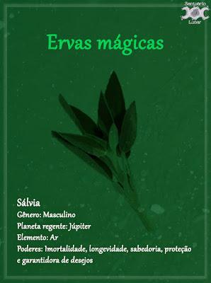 Ervas mágicas - Wicca, magia, bruxaria, paganismo - Sálvia