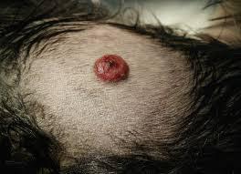 Dog Skin tumors