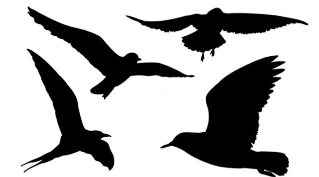 تحميل فرش فوتوشوب طيور