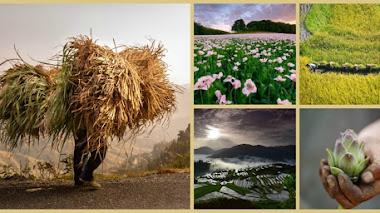 Tierra Generosa. Fotos premiadas en IGPOTY N. 10 Bountiful Earth