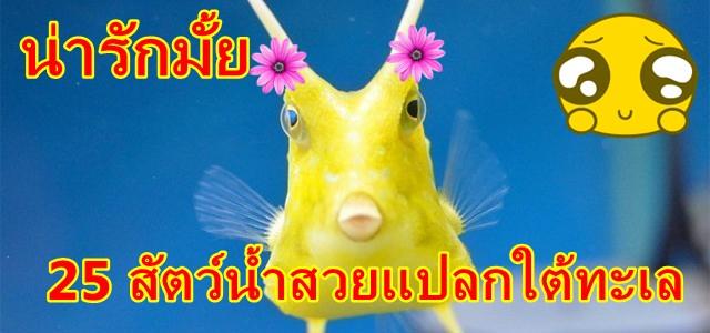 ปลาแปลกๆ, สัตว์ใต้ทะเลลึก
