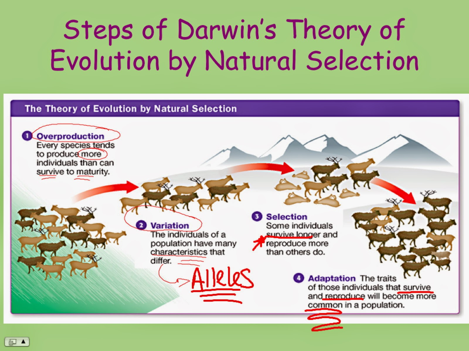 Ec Honors Biology Darwin S Theory Of Evolution By Natural