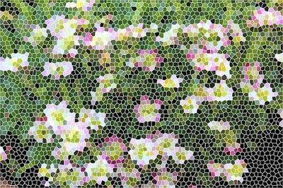 Create una Foto efecto Mosaico