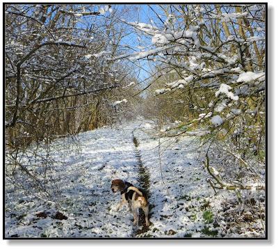 Winterlandschaft mit Hund