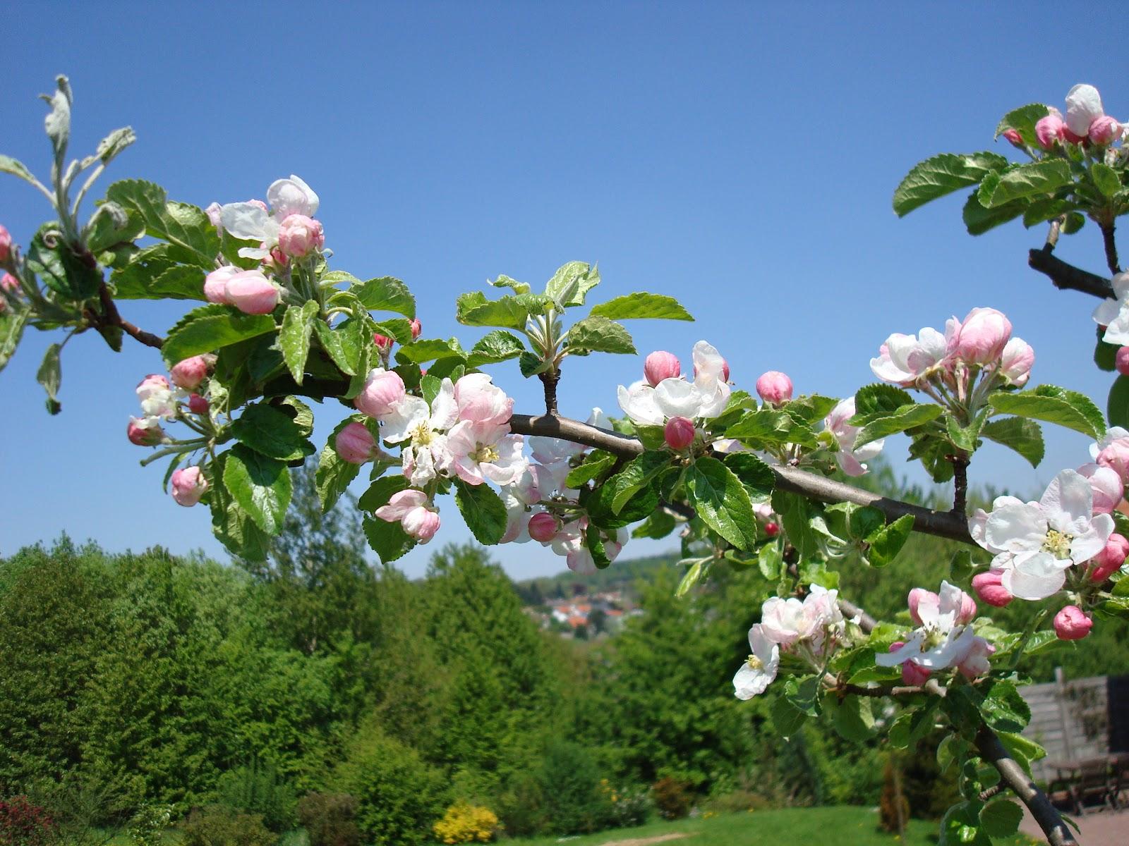 immer mit stil die magnolie bl ht. Black Bedroom Furniture Sets. Home Design Ideas