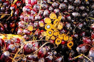 palm-oil,www.healthnote25.com