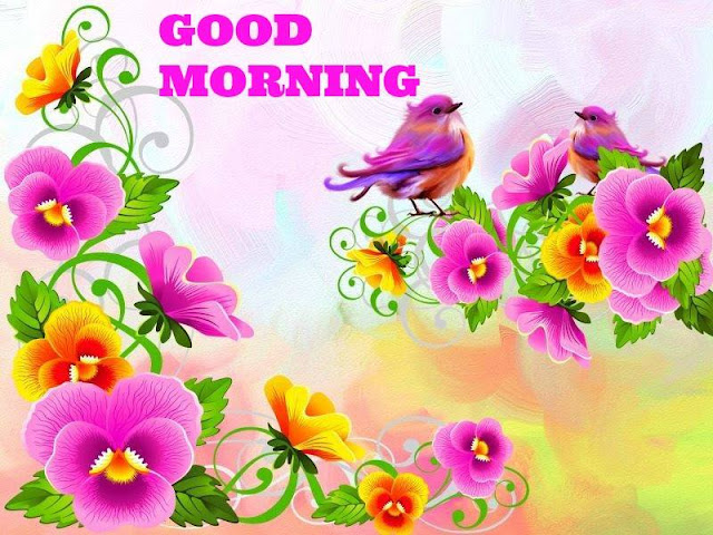 good morning,good morning wishes,good morning images,good morning flowers pictures,good morning quotes on flowers pictures,good morning images with flowers,good morning hd images with flowers,good morning pictures,good morning flowers,good morning sms,good morning pictures for whatsapp,good morning with flowers,good morning flowers pictures download,good morning twitter video,good morning love quotes