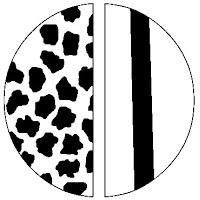 Cross sectional and Longitudinal View