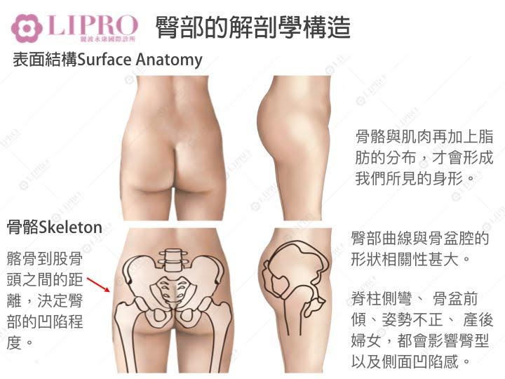 臀部解剖學構造