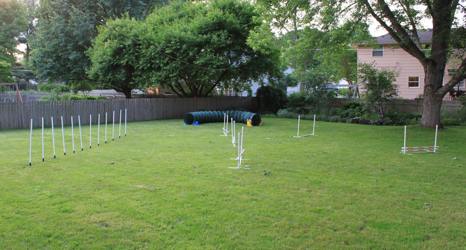 wags n woofs: Backyard Agility