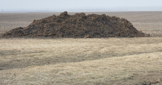 Compost, Stockpiling, and Fresh Manure – What is happening?