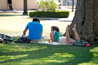 Students reading under a tree