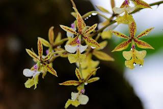 Orchids After a Rain