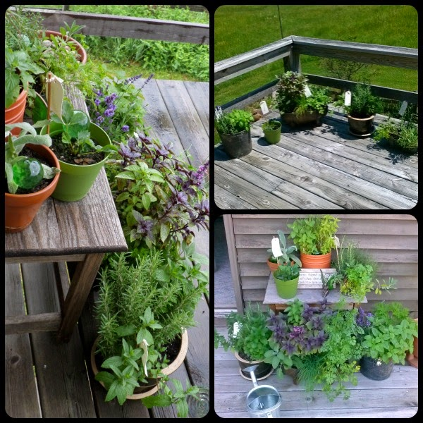 The Witches Hearth: Last Year's Herb Garden