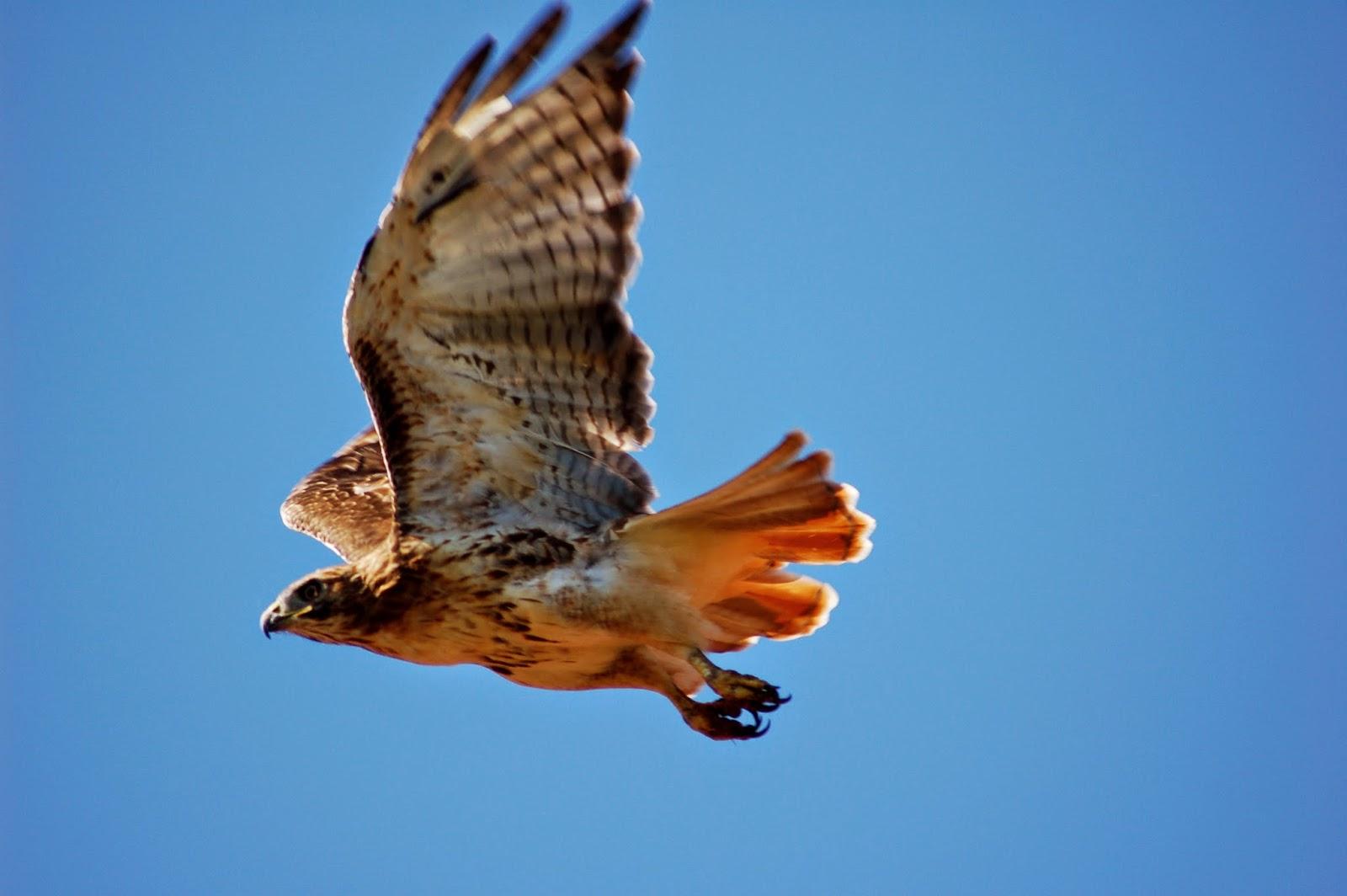 Observe Birds Of Prey In Flight on Fall Pre School