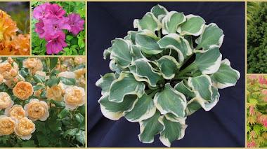 Algunas plantas nuevas en Chelsea Flower Show 2016