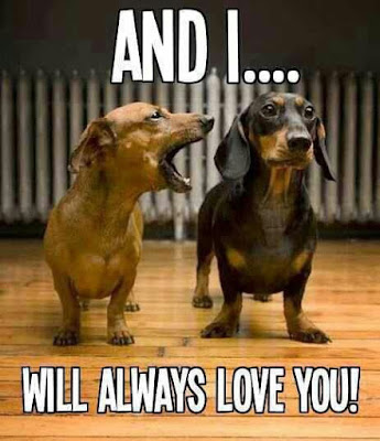 Funny Dog Humor : Did i tell you that i love you?
