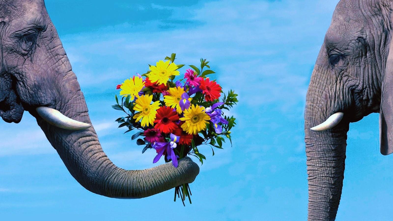 olifanten achtergronden bureaublad - photo #32
