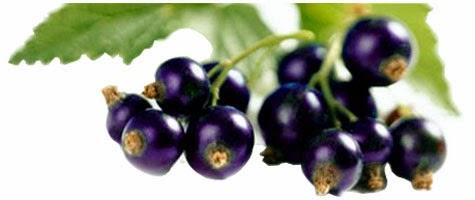 obat kanker payudara acai berry